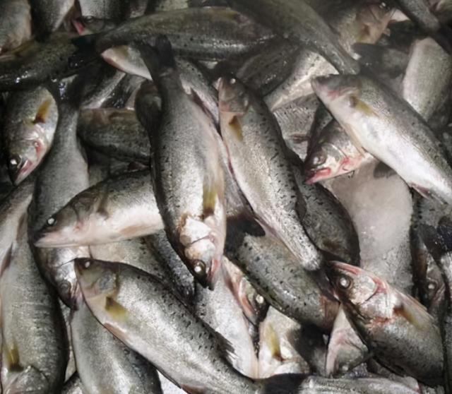 """深海鱼有哪些,这3种海鱼是""""首选"""",美味营养足,菜市场直奔,鱼贩:真会吃"""