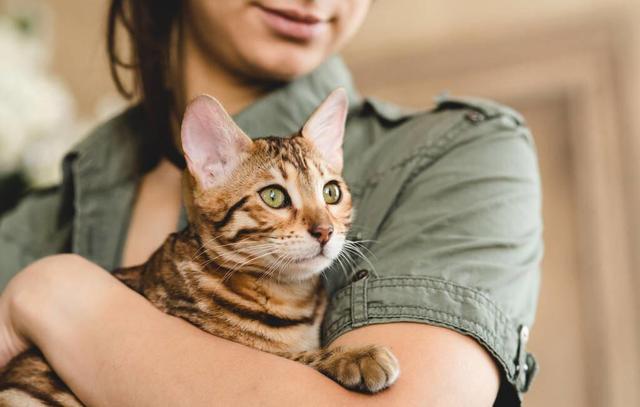 你真的會抱貓嗎?5種常見的抱貓姿勢,但3種都是錯的 家有萌寵 第4张