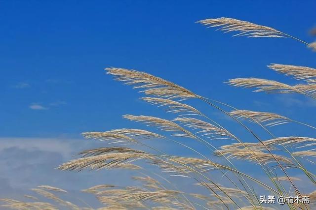 荻的诗,荻花古诗词赏析:波上荻花非雪花,风吹撩乱满袈裟