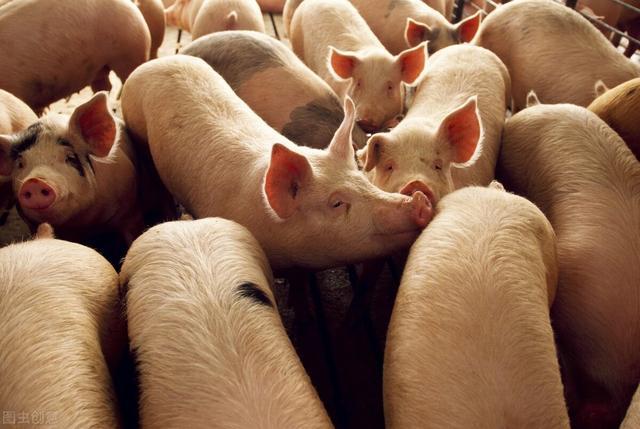 4月17日生猪价格:狂跌6天后再一次下挫