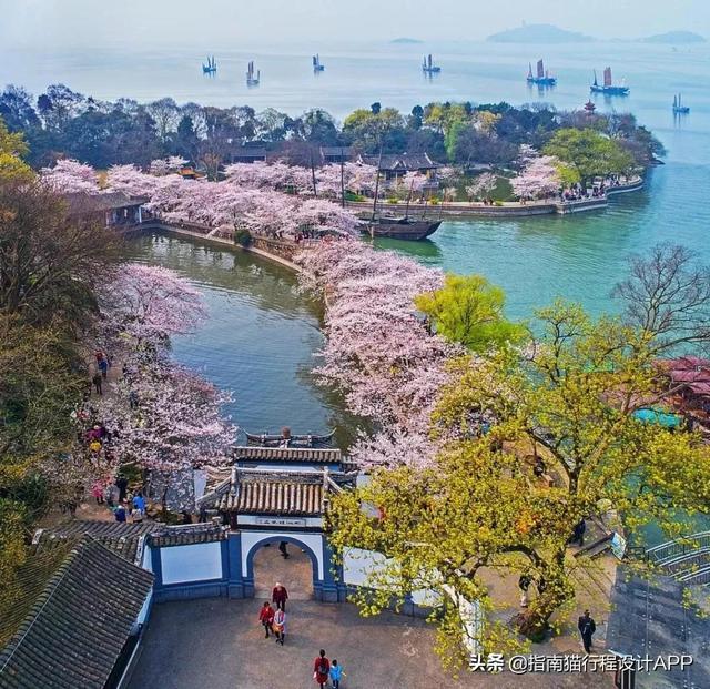 太湖鼋头渚风景区,美哭!无锡鼋头渚的樱花开了,不输日本的春季限定浪漫