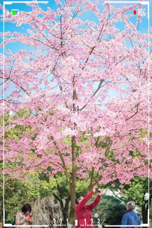 春天图片,我把新津的春天做成了高清壁纸,美爆了