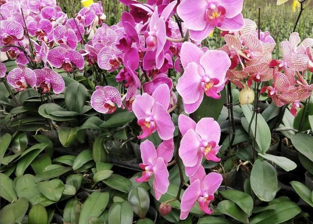 冬天开的花有哪些,5种花,在冬天开,春节期间养一盆,漂亮又喜庆