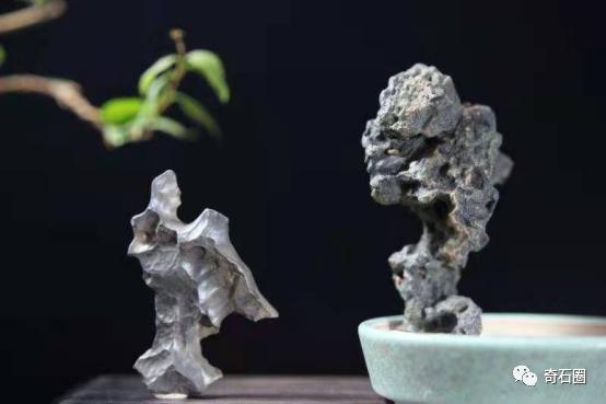 化石图片,不瞒你说,这些石头你去了主人家里都未必能看到