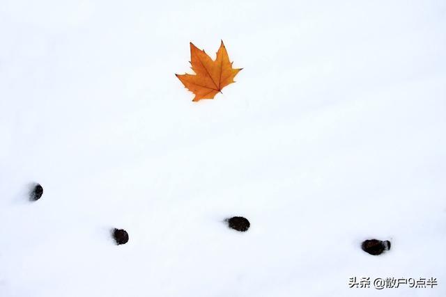 股市的诗,大雪至,股市寒,不如诗词翩然