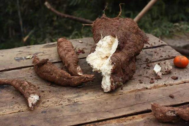 葛根图片,山上发现这植物,根茎仿佛一条大蛇,好多人都抢着挖