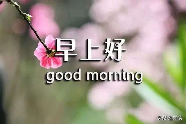 荷花的句子,早安心语:心如莲花香,一路才芬芳