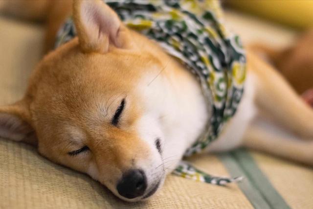 狗的寓意,狗狗在这些地方睡觉,都有不一样的含义!你知道吗?