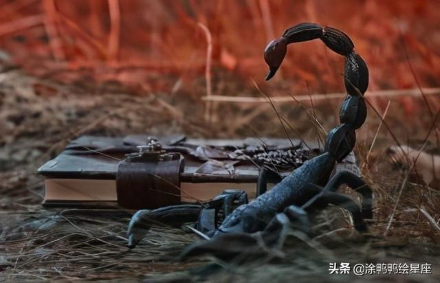 属猪的天蝎,天蝎座十二生肖中的动物和象征,他们的情绪很深,不轻易表达