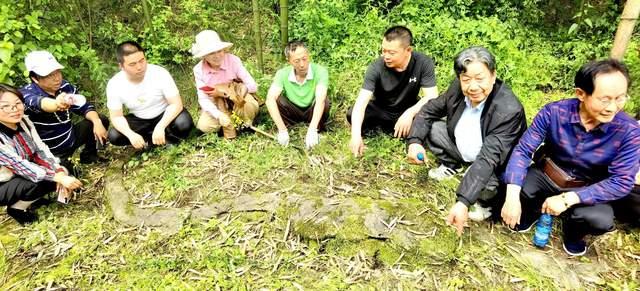湖北宜都:林中发现3条龙形石,周边怪石密布更惊心