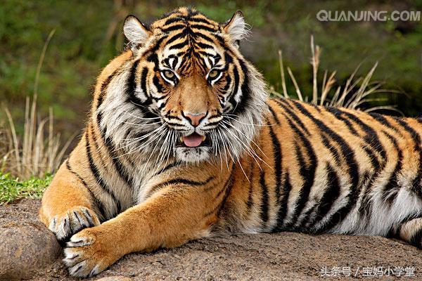 关于50年生肖虎运程的信息-第4张图片-天下生肖网