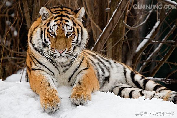 关于50年生肖虎运程的信息-第2张图片-天下生肖网