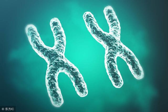 关于胎儿的染色体异常