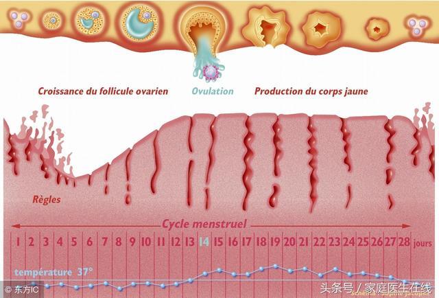 女人们听好了:排卵期间,身体容易有这5个变化