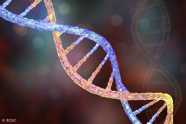 胚胎染色体异常,可使胎儿畸形,切不可贸然行事