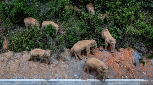 """15头亚洲象北上""""远足""""表达了哪些诉求,该如何回应"""