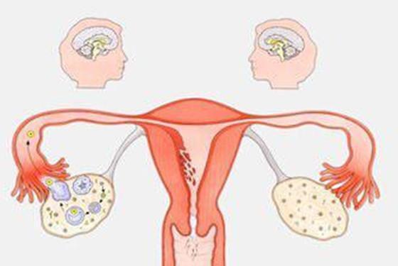 月经几天后会排卵 女人排卵期在什么时候