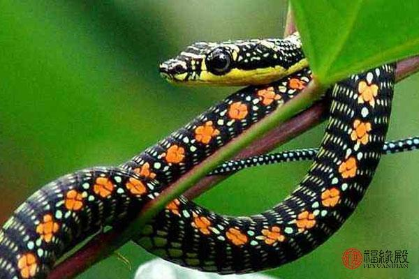 男属蛇与十二生肖婚配(属蛇和十二生肖婚配表)-第2张图片-天下生肖网
