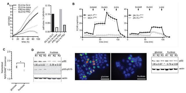 肿瘤进展加速器:Science子刊发现糖酵解引发p53突变促进肿瘤增殖