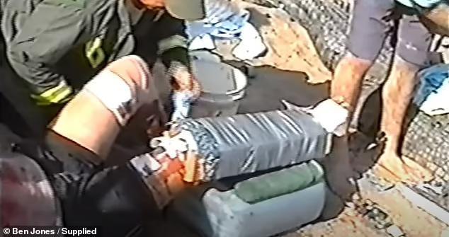 澳大利亚最恐怖巨鳄袭人视频首次曝光:老母奋不顾身鳄口救子
