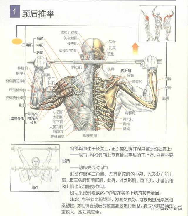 学习健身知识:恰当新手的入门书籍选举