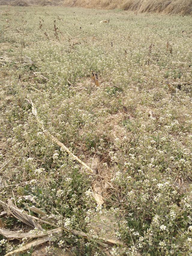 野表里到处都是这样的小野花,成片成片的