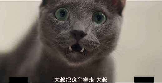 只有我没有猫影片剧照3