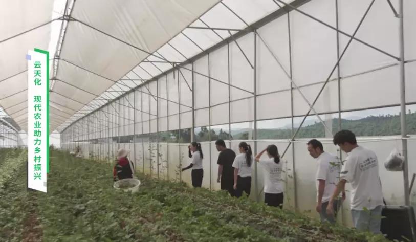 云天化大力发展现代农业,积极助力乡村振兴