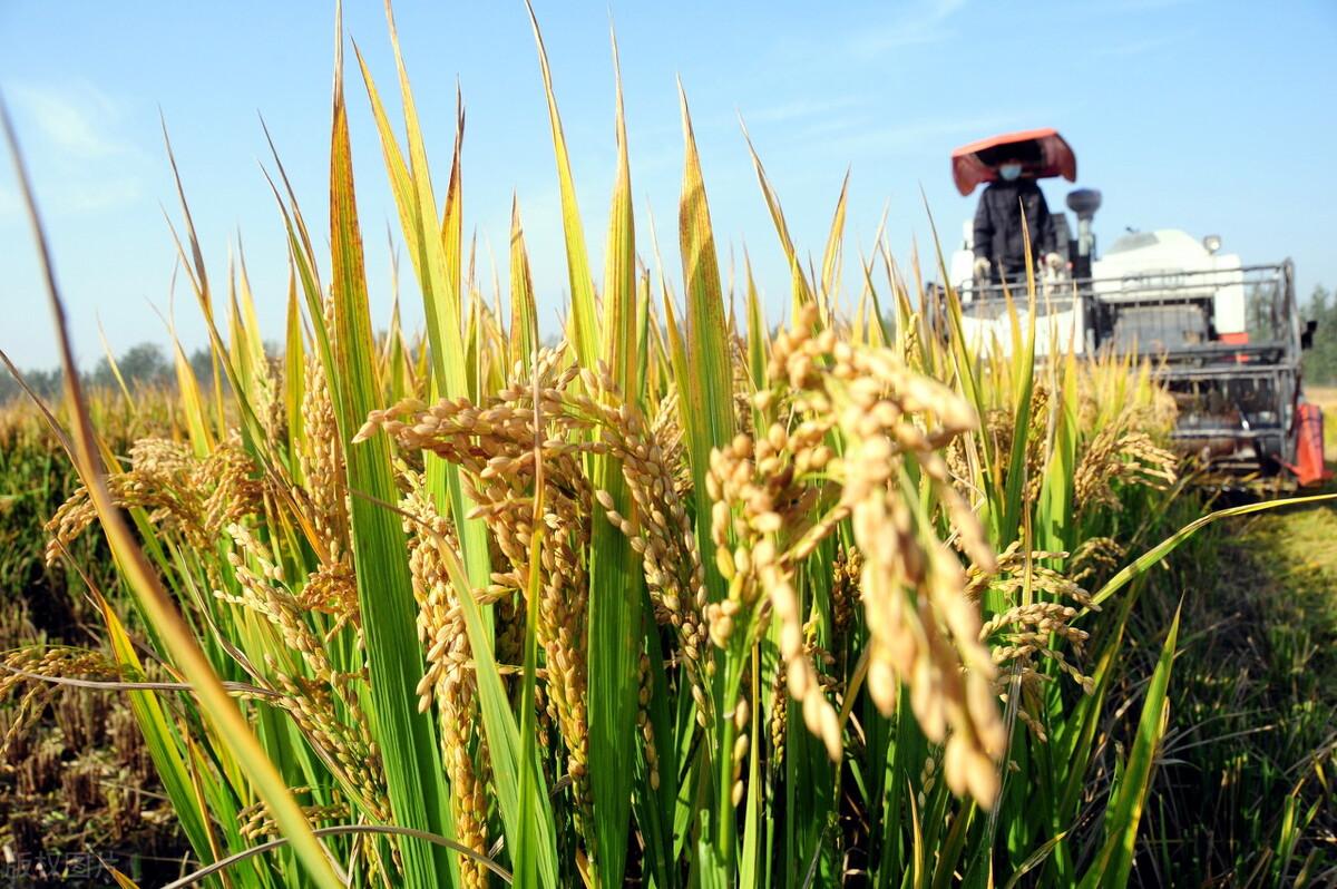 采收成本高,米乐足球平台下载迎上涨?小麦、大豆强势走高,粮价将迎上涨潮?