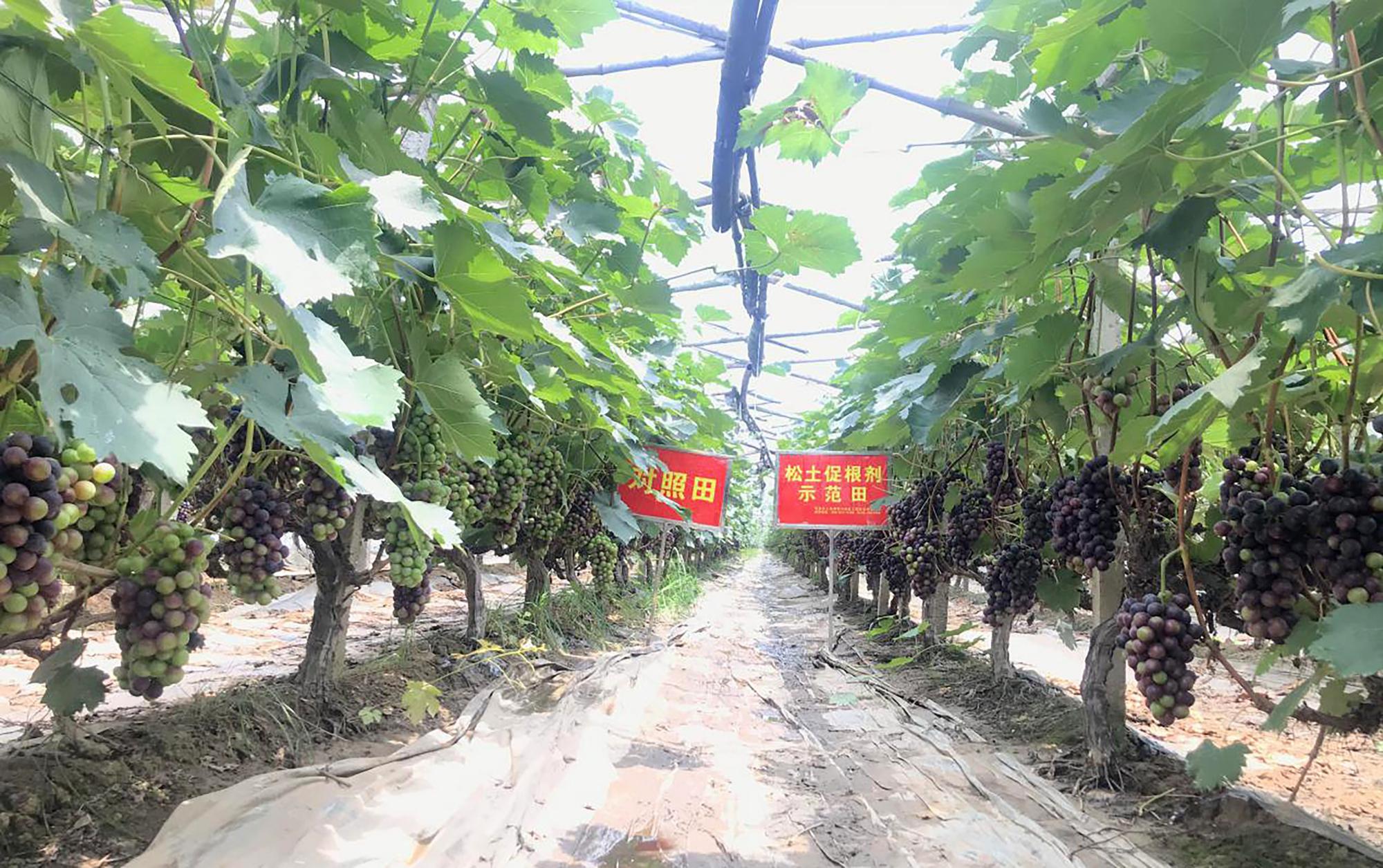土壤培肥科学施肥才是农业种植提质增产的核心