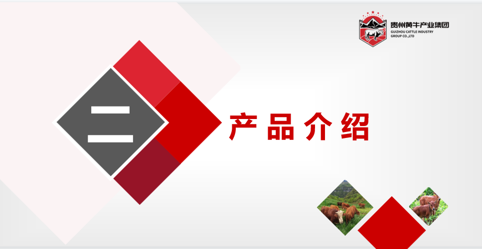 乡村振兴文化大使著名画家石金库走进贵州省黄牛集团养殖基地写生