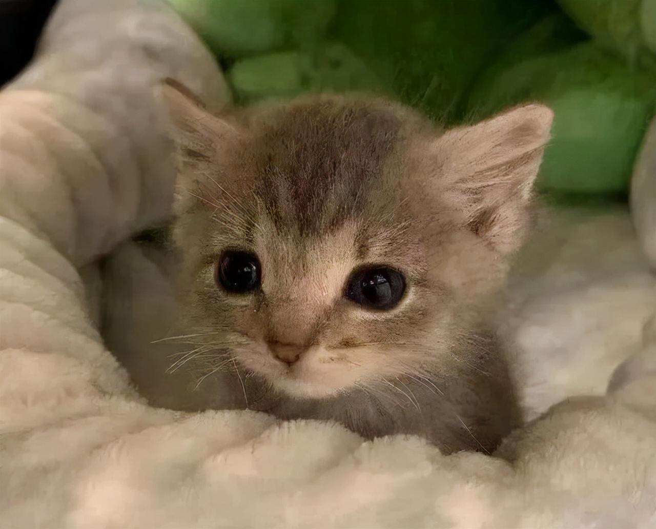 买猫要注意什么(买猫回来需要注意什么)插图(2)