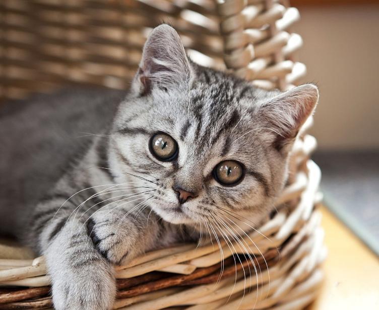 买猫要注意什么(买猫回来需要注意什么)插图