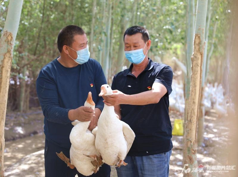 """牧羊人变身家禽""""养殖达人""""孵化禽苗一年挣了近18万元"""