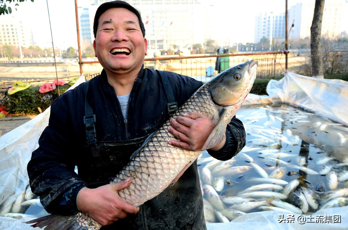 养什么鱼最赚钱(农村养什么鱼好养又挣钱)插图