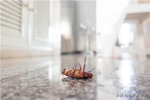 灭蟑螂用什么方法效果最好?这几个灭蟑螂方法建议收藏