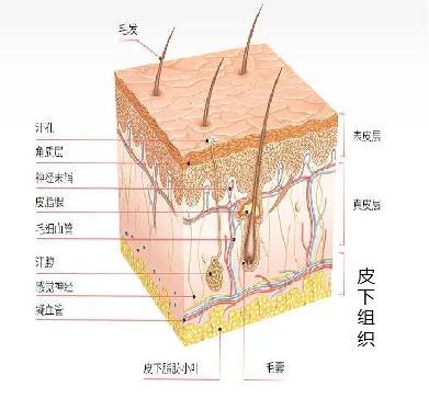 皮肤有哪些功能(皮肤有哪些生理功能)插图11