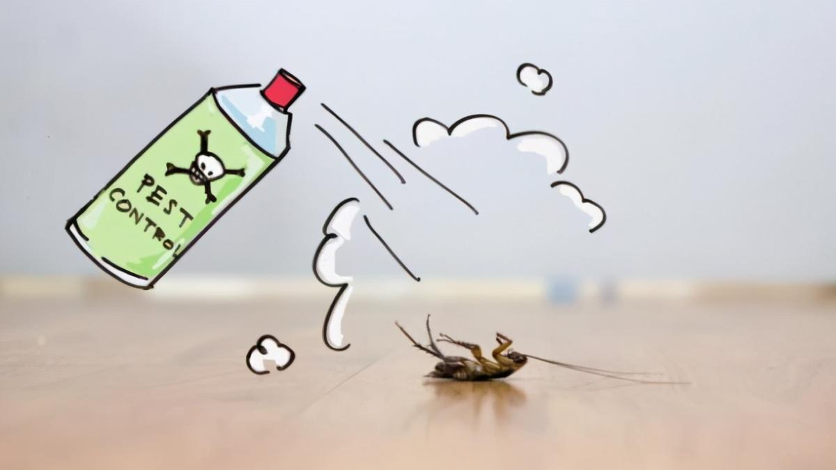 南方美洲大蠊,一次受孕终生生育,生存强繁殖快的蟑螂有天敌吗?