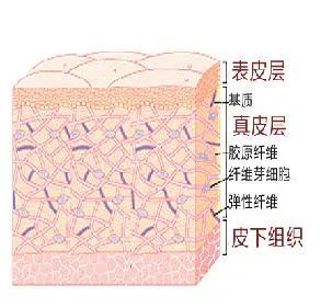 皮肤有哪些功能(皮肤有哪些生理功能)插图8