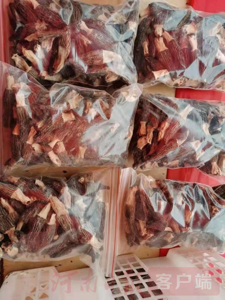 一斤羊肚菌卖到600元 看它是如何创造奇迹的?