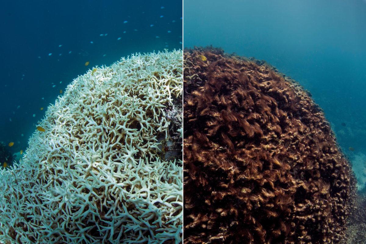 """鲨鱼专家:四分之三的鲨鱼物种濒临灭绝 这对人类也是一场""""危机"""""""
