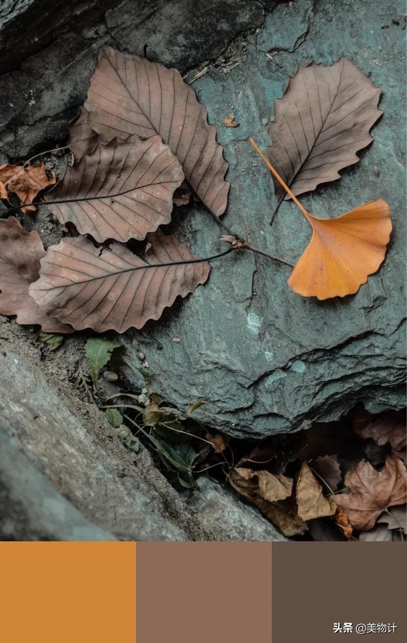 秋天最高级的配色,太美了