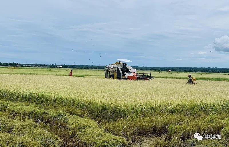超越美国、中国,柬埔寨成为越南最大农产品进口市场