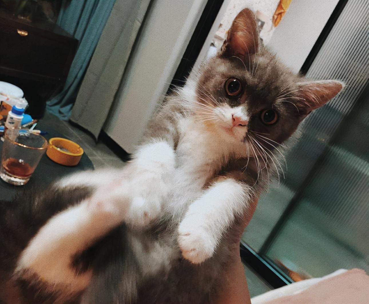 买猫要注意什么(买猫回来需要注意什么)插图(1)